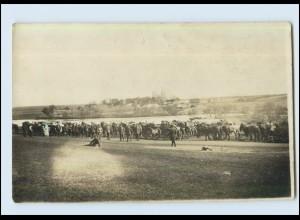 P2X14/ Transport mit Pferden 1. Weltkrieg Foto AK