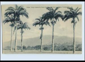 W7W32/ Trinidad AK 1909