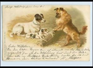 A6589/ Hunde mit Hundewelpen 1900 Litho AK