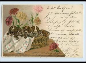 A6657/ Schöne Mailick Litho AK Hunde-Welpen im Korb 1903