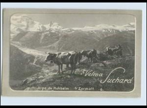 W7W63/ Chocolat Velma Suchard AK Alpe de Hohbalm Zermatt AK Kühe ca.1910