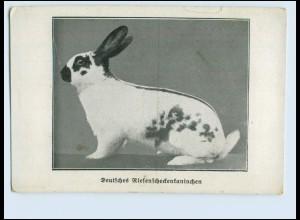 W8C65/ Kaninchenzüchter AK Dt. Riesenscheckenkaninchen ca.1912