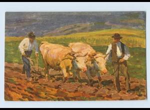 F225/ Ochsenpflug Landwirtschaft AK ca.1910