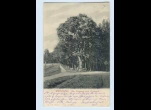 X1F07/ Bad Wörishofen Eingang im Eichwald AK 1905