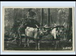 Y185/ Au Pays Gascon - Attelage dew Boeufs Ochsenfuhrwerk Foto AK Frankreich