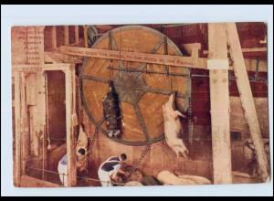 N1264/ Chicago Schlachthof Schweine - Revolving hog wheel armour plant. AK