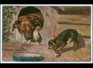Y1720/ Hunde Terrier mit Knochen 1916 AK