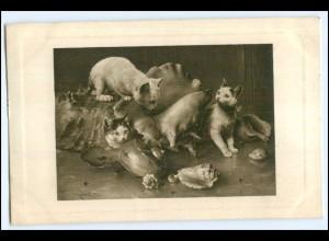Y1718/ Katzen und Muscheln 1914 AK