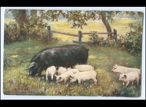 "N8066/ ""The Simple Life"" Tuck`s AK Schweine Ferkel ca.1910"