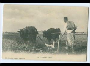 N8129/ Laboureur Cretois Ochsenfuhrwerk Griechenland AK ca.1900