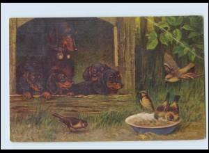 Y3094/ Hund Dackel Vögel Küstler AK 1932