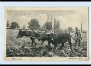 T221/ Mazedonien Bauer Ochsenpflug AK 1917