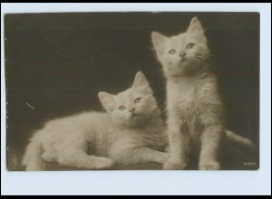 Y3752/ Katzen Katzenbabys 1914 Foto AK