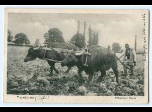 T2580/ Mazedonien Ochsenpflug Bauer Landwirtschaft AK 1917