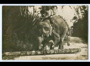 T3237/ Ceylon Elephant at work Elefant Foto AK ca.1920