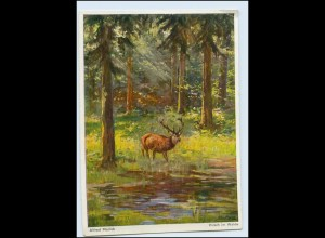 Y5136/ Alfred Mailick AK Hirsch im Walde AK ca.1935