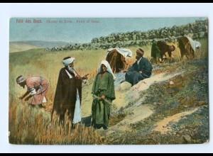 T5319/ Feld des Boas Palästina AK ca.1905