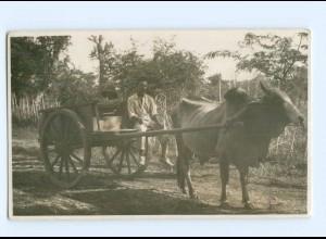 T5282/ Niederländisch Indien Indonesien Ochsenfuhrwerk Foto AK 1929