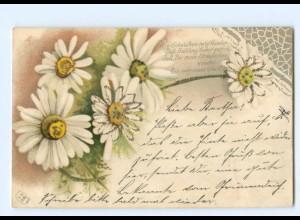 Y6304/ Blumen Litho Glimmer AK Gänseblümchen 1901