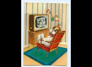 Y6563/ Fernseher Hund schöne Krüger AK ca.1965