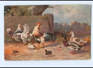 Y8835/ Geflügel Hühner Hahn Enten AK 1912
