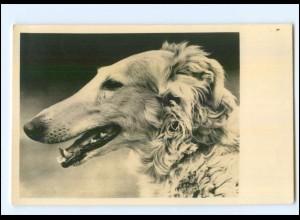 Y9956/ Hund Windhund Foto AK ca.1935