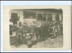 U4955/ Serbischer Ochsenwagen mit Büffel Foto Ak Serbien 1916
