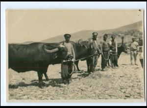 U5040/ Veles Mazedonien Bulgaren mit ihren Büffeln Original Foto 1916