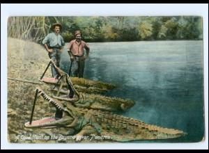 Y11724/ Panama Bugano River Krokodil-Jagd 1910 AK