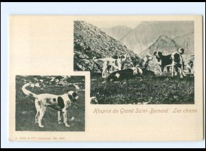 U6662/ Hospice du Grand Saint-Bernard Bernhardineer AK ca.1900 Wallis