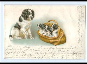 Y13431/ Hunde schöne Litho AK ca.1900
