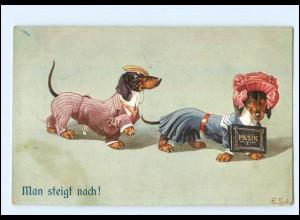 U8224/ menschliche Hunde Dackel als Student schöne AK 1911