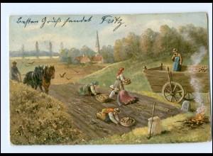 Y13581/ Kartoffelernte Landwirtschaft AK 1907