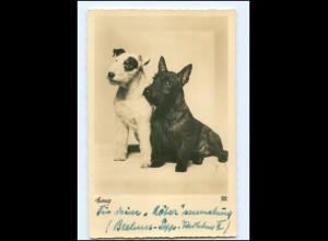 Y13765/ Hunde Foxterrier Scottish-Terrier 1937 Foto AK