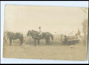 Y14304/ Landwirtschaft Heuernte Privat Foto AK 1914