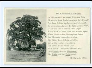 Y15076/ Hohwacht Ostseebad Pension Buchholz Wotanseiche Baum Ak ca.1935
