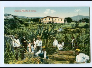 Y15963/ Madeira Apanha de canas Portugal AK ca.1910