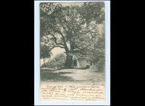 XX009485-172/ Röbel Kron-Eiche mit Jägerhaus 1907 AK