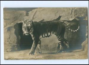 Y16120/ Zoologischer Garten Berlin Tiger NPG Foto AK 1913