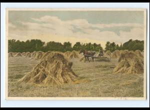 Y16634/ Ernte Heuernte Landwirtschaft AK 1912