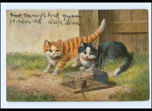 Y16943/ Katzen mit Mausefalle 1904 AK