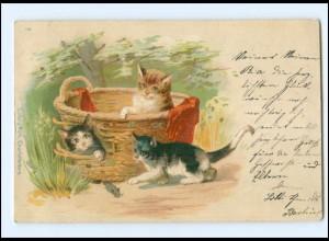 Y16940/ Katzen im Wäschekorb 1899 Litho AK