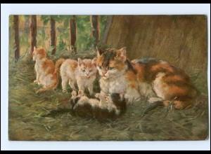Y16938/ Katzen mit Kitten 1910 AK