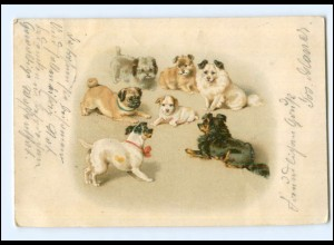 Y16937/ Hunde Mops Spitz Terrier 1900 Litho AK