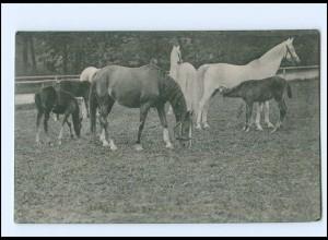 V572/ Pferde schöne AK 1910