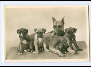 Y16944/ Hunde Bulldoggen Foto AK