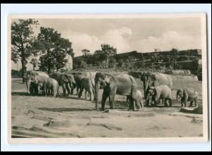 V480/ Hamburg Tierpark Zoo Hagenbeck Elefanten Foto AK ca.1935