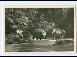 V481/ Hamburg Tierpark Zoo Hagenbeck Braunbären Schlucht Foto AK ca.1935
