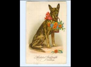 Y17131/ Geburtstag Hund Schäferhund Litho AK
