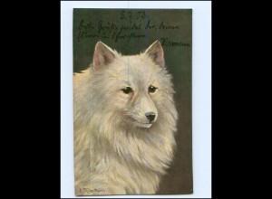 Y17138/ Hund Spitz 1903 AK